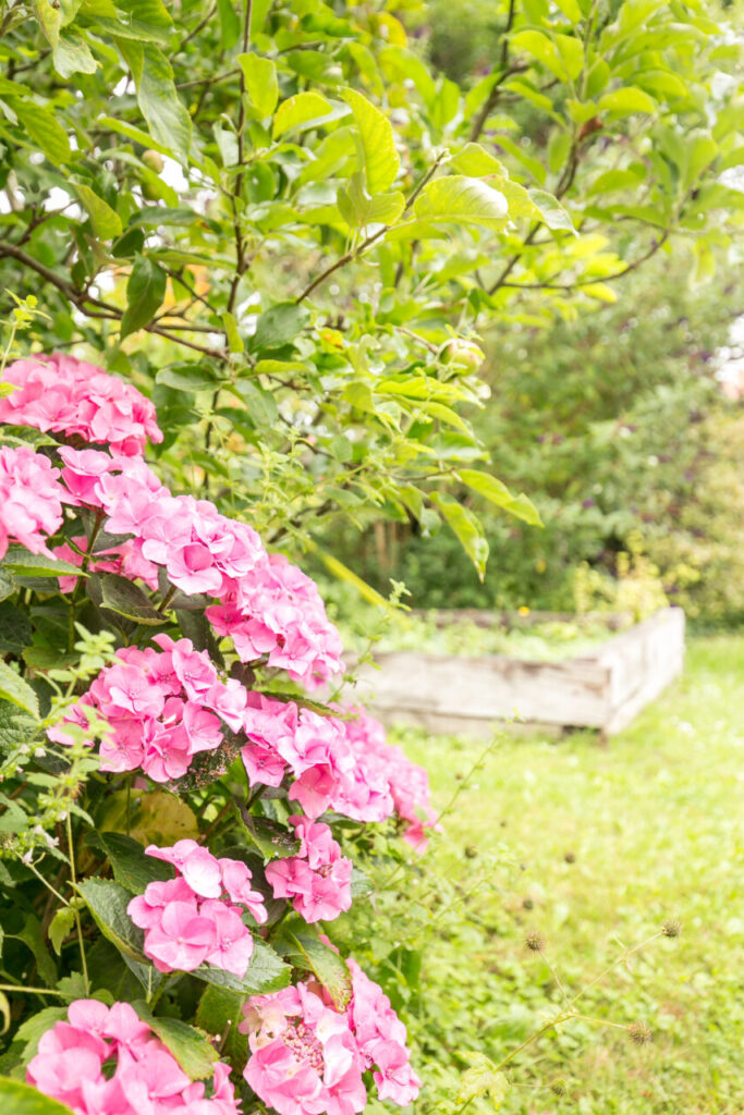 17 Garden Flowers