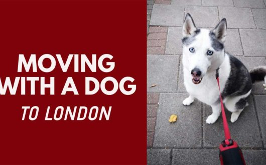 Moving To London With A Dog